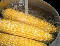 Fresh Sweet Corn Royalty Free Stock Photos