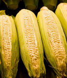 Fresh Sweet Corn Royalty Free Stock Photos
