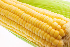 Fresh sweet corn Stock Photography