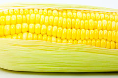 Fresh sweet corn, closeup Stock Images