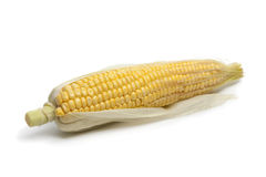 Fresh sweet corn on the cob Royalty Free Stock Image