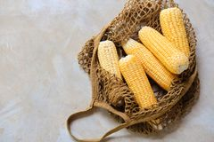 Fresh Sweet Corn Cob in Eco Textile Net Bag. Summer Agriculture Harvest. Yellow Whole Maize Ear Top Down View with Copy Space. Healthy Organic Golden Grain for royalty free stock photography