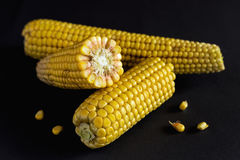 Fresh sweet corn on cobs. At black rustic table. Close up Royalty Free Stock Photos