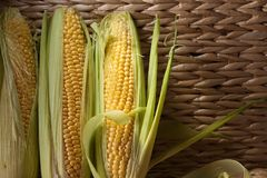 Fresh sweet corn on cobs . Copy space Royalty Free Stock Photos