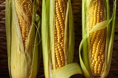 Fresh sweet corn on cobs . Healthy organic food Royalty Free Stock Photography
