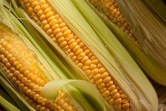 Fresh sweet corn on cobs . Healthy organic food Stock Photo