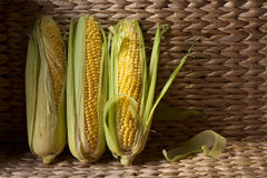 Fresh sweet corn on cobs . Healthy organic food Stock Image