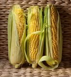 Fresh sweet corn on cobs . Healthy organic food Royalty Free Stock Images