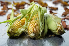 Fresh sweet corn on cobs . Fresh sweet corn on cobs on iron table. Healthy organic food Stock Images