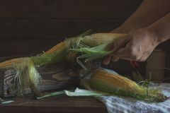 Fresh sweet corn on cobs on rustic wooden table Royalty Free Stock Photos