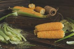 Fresh sweet corn on cobs on rustic wooden table. Close up. Toned. Shallow depth of field Stock Photo