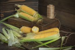 Fresh sweet corn on cobs on rustic wooden table. Close up. Toned. Shallow depth of field Royalty Free Stock Image