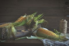 Fresh sweet corn on cobs on rustic wooden table Royalty Free Stock Photo