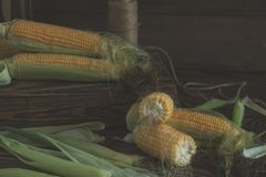 Fresh sweet corn on cobs on rustic wooden table. Close up. Toned. Shallow depth of field Royalty Free Stock Photo