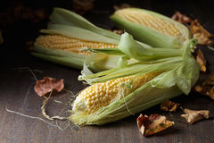 Fresh sweet corn on cobs . Fresh sweet corn on cobs on rustic wooden table. Healthy organic food Stock Photography