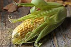 Fresh sweet corn on cobs . Fresh sweet corn on cobs on rustic wooden table. Healthy organic food Royalty Free Stock Photos