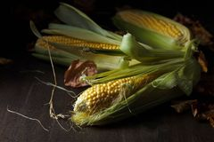 Fresh sweet corn on cobs . Fresh sweet corn on cobs on rustic wooden table. Healthy organic food Stock Photos