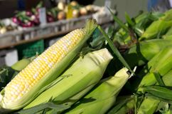 Fresh Sweet Corn. On display at a local farmers market Stock Images