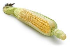 Fresh sweet corn isolated Royalty Free Stock Photo