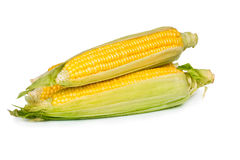 Fresh sweet corn Royalty Free Stock Photography