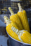 Fresh sweet corn Stock Images
