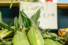 Fresh sweet corn for sale at the farmers' market Royalty Free Stock Photo