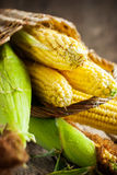 Fresh Sweet Corn, selective focus Royalty Free Stock Photo