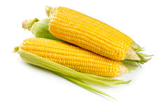 Fresh sweet corn. On white background Royalty Free Stock Photos