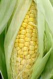 Fresh sweet corn Stock Images