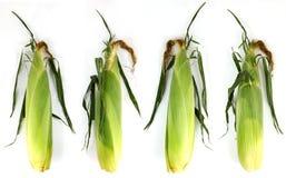 Fresh sweet corn Royalty Free Stock Images