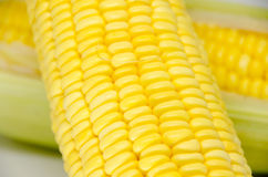 Fresh sweet corn on  the white background. Fresh sweet corn from con tree on  the white background Royalty Free Stock Photos