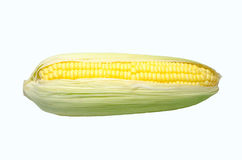 Fresh sweet corn on  the white background. Fresh sweet corn from corn-tree on  the white background Royalty Free Stock Images