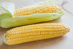 Fresh sweet corn on wooden table. Selective focus Royalty Free Stock Photography