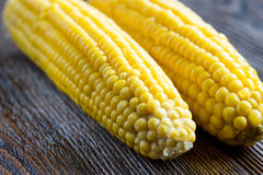 Fresh sweet corn on wooden table. Selective focus. Two fresh corn on cobs on rustic wooden table, closeup Royalty Free Stock Image