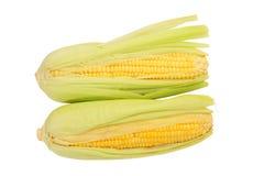 Fresh Sweet Corns Royalty Free Stock Image