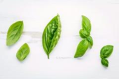 Fresh sweet green basil leaves on  white shabby wooden backgroun Royalty Free Stock Images