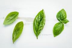 Fresh sweet green basil leaves on  white shabby wooden backgroun Stock Photo
