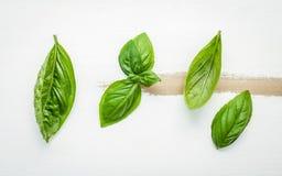 Fresh sweet green basil leaves on  white shabby wooden backgroun Stock Photography