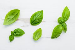 Fresh sweet green basil leaves on  white shabby wooden backgroun Stock Images