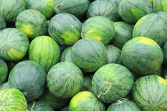Fresh  sweet green water melons Stock Photo