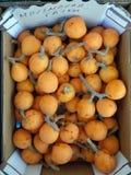 Fresh Sweet Loquat Fruit Royalty Free Stock Photos