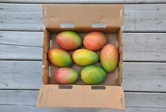Fresh sweet mangoes. Packed in carton stock photos