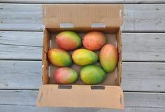 Fresh sweet mangoes Stock Photos