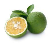 Fresh sweet orange. Stock Photography