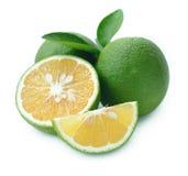 Fresh sweet orange. Stock Images