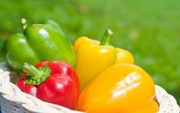 Fresh sweet  paprika . Stock Photography
