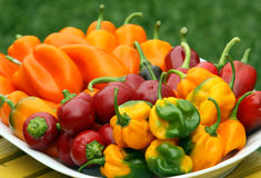 Fresh sweet peppers and chilies Royalty Free Stock Image