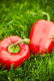 Fresh sweet peppers Royalty Free Stock Images