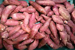 Fresh sweet potato. With root at farmer market royalty free stock photography