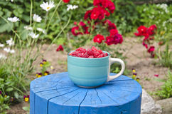Fresh sweet raspberry in blue ceramic cup on wooden trunk Stock Photos